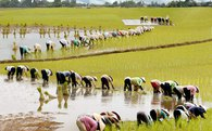 Nền nông nghiệp đang bị doanh nhân Việt bỏ rơi như thế nào?