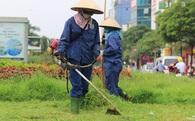 Hà Nội cắt cỏ trở lại sau 3 tháng tạm dừng