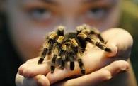 Đồ ăn của loài nhện duy nhất ăn chay trên thế giới là gì?