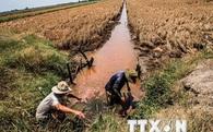 Nông nghiệp Đồng bằng sông Cửu Long có thể kiệt quệ do xâm nhập mặn