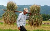 Đại gia Việt cùng nhau xắn tay làm nông: Vingroup trồng rau, Hòa Phát bán thịt lợn, HAGL nuôi bò, Thaco làm máy cày và máy gặt