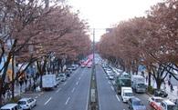 Tư duy cửa sổ vỡ: Người Nhật đã ngăn việc xả rác ra đường bằng cách... vứt hết thùng rác đi như thế nào?