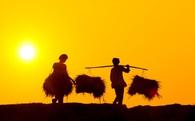 Chỉ 4 năm nữa, Việt Nam sẽ có doanh nghiệp thuần nông tỷ USD?
