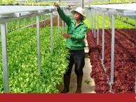 Trang trại rau hai tầng không cần đất ở Đà Lạt