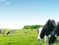 Ngành sữa Việt Nam đang ở giai đoạn nào?