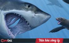 """Văn hóa Tencent giống như """"tử cung"""" của cá mập mẹ: Cá mập con chưa ra đời sẽ cắn chết anh chị em để trở thành cá thể sống sót duy nhất"""