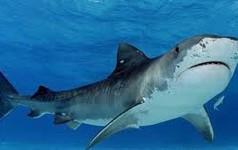 9 chiêu 'hack' giúp startup chiến thắng trong Shark Tank