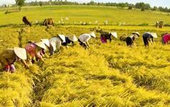 Lao động nông thôn ở đâu trong Cách mạng 4.0?