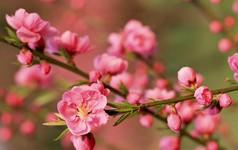 Những loại hoa gia đình nào cũng nên trưng trong ngày Tết để rước thêm may mắn và tài lộc vào nhà