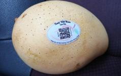 """Chỉ với smartphone và internet, nông dân Đồng Tháp có thể tự lên đời xoài Cát Chu thành """"xoài blockchain"""", người tiêu dùng 5 châu đều dễ dàng truy xuất nguồn gốc"""