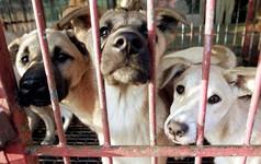 Hàn Quốc thực hiện cuộc cách mạng: Tòa án ra phán quyết giết thịt chó là bất hợp pháp