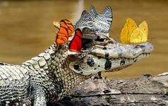 Chuyện 2 con cá sấu và bài học thấm thía cho những kẻ cứ mải lao mình vào làm việc, cho rằng bận rộn mới đem lại thành quả mà không hề biết đôi khi những người 'chẳng làm gì' mới thành công rực rỡ