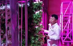 Hàn Quốc biến hầm đường bộ bỏ hoang thành trang trại rau sạch lớn nhất thế giới, tham vọng hồi sinh nền nông nghiệp
