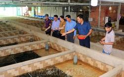 Bỏ chức Giám đốc, về quê nuôi lươn giống lãi tiền tỷ mỗi năm