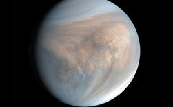 Nghiên cứu mới: Phát hiện ra dấu vết của sự sống trong khí quyển Sao Kim, hành tinh sát vách Trái Đất