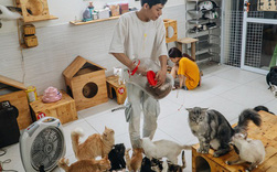 Chàng trai 24 tuổi bỏ công việc ổn định để cứu trợ mèo, mái ấm của các bé mèo lên hãng thông tấn AFP của Pháp