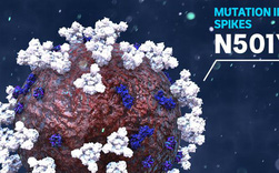 Giải thích con đường biến chủng của virus SARS-CoV-2 bằng kiến thức sinh học lớp 9