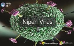 WHO cảnh báo virus Nipah có thể đột biến và gây ra đại dịch tiếp theo