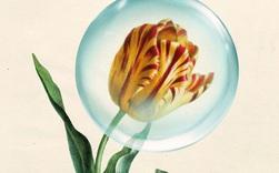 Từ cơn sốt hoa tulip đến sự bùng nổ của cổ phiếu internet: Diễn biến thị trường hiện có điểm gì tương đồng so với những quả bong bóng trước đây?