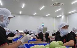 Cú hích 200 tỉ USD từ xuất khẩu: Kỳ tích thủy sản, rau quả