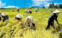 Hàng loạt ưu đãi cho doanh nghiệp đầu tư vào nông nghiệp