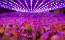 Mô hình trồng rau không cần đất, ánh sáng, dùng ít nước hơn 20 lần nhưng năng suất đạt gần gấp đôi so với nông nghiệp truyền thống
