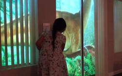 Chỉ bằng máy chiếu, ông bố khiến cô con gái mê khủng long vỡ òa trong thích thú