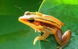 Có 3 con ếch ngồi trên 1 chiếc lá, 1 con quyết định nhảy xuống sông, hỏi còn lại bao nhiêu con ếch trên chiếc lá đó?