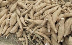 """Xuất khẩu sắn và các sản phẩm sắn sang Hàn Quốc tăng """"sốc"""""""