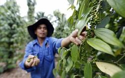 """Nỗi buồn ngành hàng tỷ đô: 5 năm diện tích trồng tăng gấp 3, """"bao"""" 60% lượng xuất khẩu toàn thế giới, nhưng nay nông dân Việt """"cay mắt"""" khi giá rớt từ 10 USD xuống 2 USD/kg"""