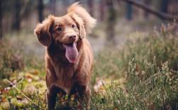 Cách tạo dấu ấn và thu phục nhân tâm của người khôn ngoan: Hãy lắng nghe như một chú chó!