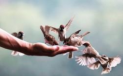 Làm người: Lương thiện cần có chừng mực, hào phóng cũng phải có nguyên tắc