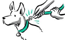 Từ ngưỡng cửa của một điều vĩ đại, startup dắt chó đi dạo Wag đã tuột dây và suy sụp như thế nào