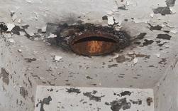 Bốn triệu con kiến bị mắc kẹt dưới hầm hạt nhân thời Liên Xô, chúng đã làm thế nào để sống?