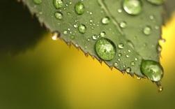 Phát triển thành công lá nhân tạo có thể quang hợp như thật, vừa loại được CO2 lại vừa tạo ra cả oxy và nhiên liệu