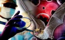 Phòng thí nghiệm Vũ Hán phủ nhận tin đồn bệnh nhân số 0, tiết lộ chi tiết lạ về ca nhiễm bệnh đầu tiên