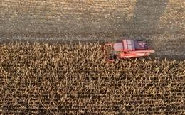 """Nông dân bỏ thôn quê, bão lũ càn quét: Những cánh đồng ngô ở TQ """"hẩm hiu"""" vì không có người thu hoạch"""
