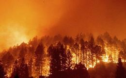 Cháy rừng tại California, 50.000 người phải sơ tán