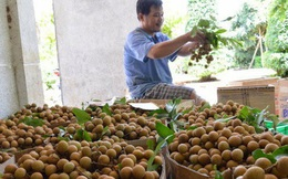 Việt Nam đặt mục tiêu lọt top 5 quốc gia xuất khẩu rau quả lớn nhất thế giới