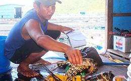 Tôm hùm, ốc hương tăng giá, ngư dân miền Trung tranh thủ bán hải sản chạy... bão