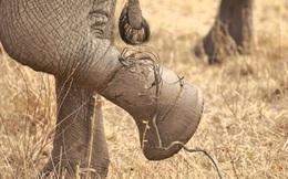 Cách bước ra khỏi vùng an toàn: Bài học từ chú voi 5 tấn bị trói bởi một sợi dây thừng nhỏ
