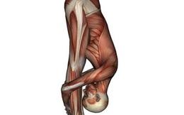 TS Mỹ tiết lộ tư thế cúi gập người: Giảm stress, rất tốt cho gan, thận, làm khỏe cơ bắp