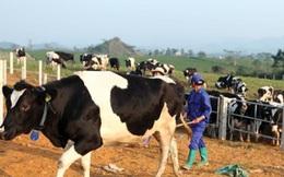 Sữa Mộc Châu chuẩn bị lên sàn Upcom