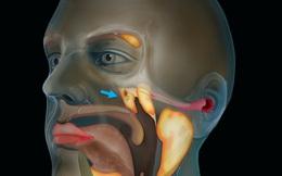 Các nhà khoa học vừa phát hiện một cơ quan hoàn toàn mới nằm sau mũi chúng ta