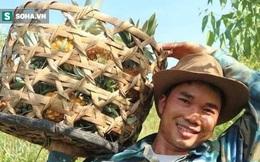 """Chàng kỹ sư Nghệ An trồng loại trái """"đầu rồng, đuôi phụng, cánh tiên"""", tiêu thụ 2 tấn/ngày"""