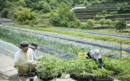 """Hai vợ chồng 8X nghỉ việc về quê trồng rau làm ruộng: Thay vì mù quáng theo đuổi vật chất thành thị, chỉ cần có khoảng sân nhỏ và sống chậm rãi đã là """"hưởng thụ cuộc sống"""""""