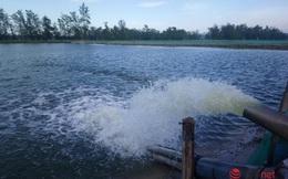 Ngập úng dài ngày, nhiều chủ đầm thủy sản ở phá Tam Giang thiệt hại lớn, nguy cơ mất trắng