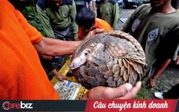 Hàng năm có khoảng 200 cá thể hổ, 1.000 cá thể tê giác và 10.000 cá thể tê tê bị tiêu thụ trái phép trên toàn cầu