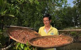 Nghề làm tôm khô truyền thống ở Cà Mau