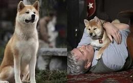 Câu chuyện cảm động về những chú chó trung thành nhất mọi thời đại khiến hàng triệu người không cầm được nước mắt
